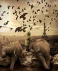 Paris_birds.jpg